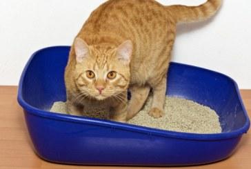 """Politia belgiana ofera mancare virtuala pisicilor care """"au ajutat-o"""" in operatiunile antiteroriste"""