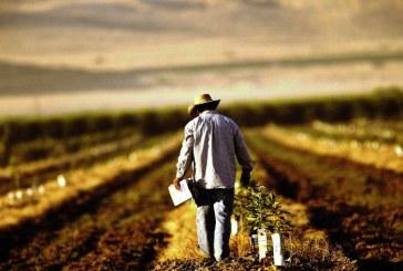 APIA a autorizat la plata 715 milioane de euro catre 517.928 fermieri, in cadrul campaniei de plati in avans 2019