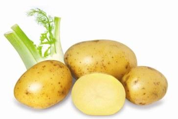 """Cartofii, """"scut"""" impotriva cancerului la stomac"""