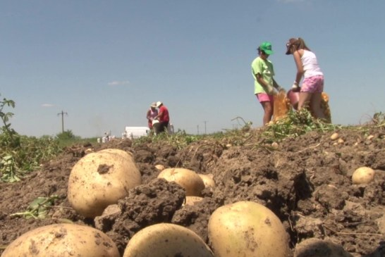 Agricultorii maramureseni, incurajati sa se specializeze in diferite domenii (VIDEO)