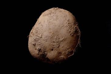O fotografie a unui cartof, vanduta cu 1 milion de euro