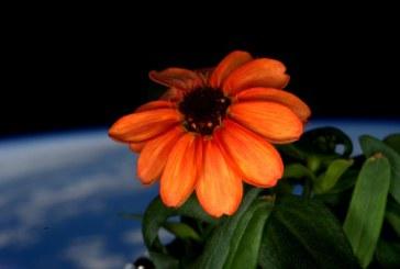 A inflorit prima floare in spatiu