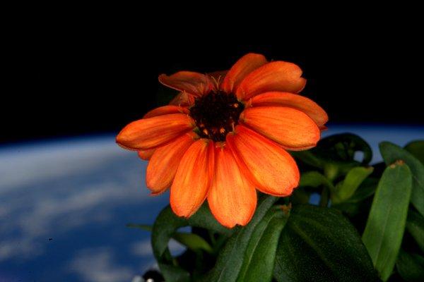 floare spatiu
