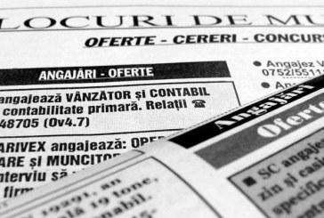 Locuri de munca in Maramures: Vezi unde te poti angaja