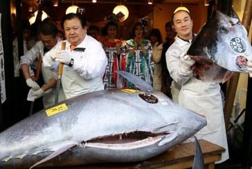 Un peste ton gigant a fost vandut cu 117.000 de dolari la piata din Tokyo