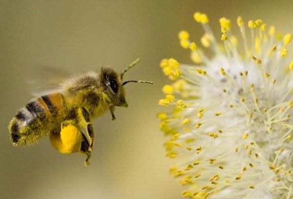 Alergiile de primavara: Metode simple de prevenire a simptomelor