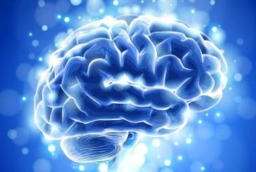 Studiu: A avea un creier mai mare nu este neaparat o veste buna