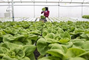 Japonia: Prima ferma robotizata din lume ar urma sa devina complet functionala in 2017