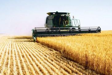 Producţia de cereale din România în scădere cu 37,6%
