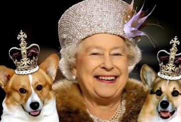 Cainii Reginei Elisabeta a II-a au regim alimentar personalizat si mananca in ordinea varstei