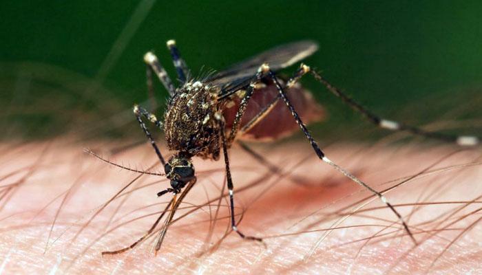 Ministerul Sanatatii recomanda masuri de prevenire a infectarilor cauzate de intepaturile de tantari