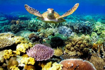 Marea Bariera de corali prezinta semne de albire