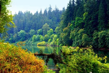 Romsilva vrea sa impadureasca peste 240 de hectare in Maramures