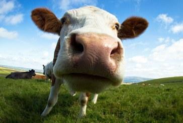 Parlamentul European vrea sa limiteze utilizarea antibioticelor in crescatoriile de animale