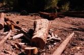 Continua taierile ilegale de lemn in Maramures. Ce au descoperit politistii