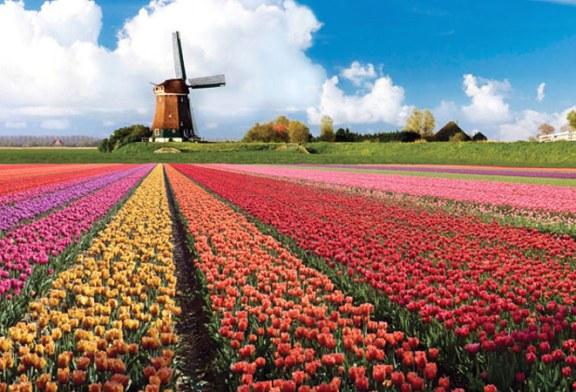 Olanda: Parcul floral Keukenhof prezinta in acest an circa 7 milioane de fire de flori