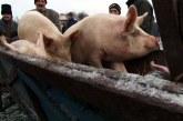 Transportul de animale vii, în vizorul polițiștilor din Bogdan Vodă
