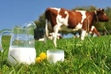 INS: Cantitatea de lapte de vaca colectata de unitatile de procesare a crescut cu 5,8% in ianuarie; importurile au scazut cu 40%
