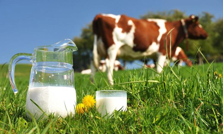 Un roman a consumat lunar, in medie, 3,39 kg de carne si 5,76 litri de lapte, anul trecut