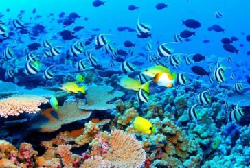 Australia: Valoarea Marii Bariere de Corali a fost estimata la 37 de milliarde de euro