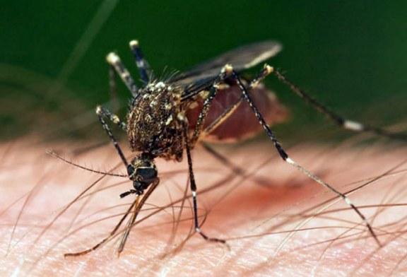 INSP: 7 cazuri de infectie cu virusul West Nile