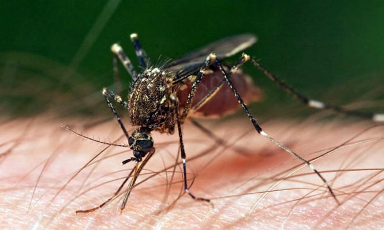 INSP: 11 cazuri de infectie cu virusul West Nile; doua decese