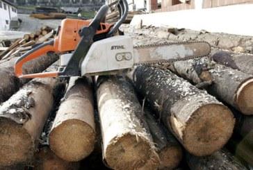 Maramureseni pinsi in flagrant in timp ce taiau arbori ilegal