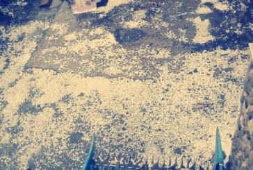 Natura dezlantuita: Furtuna cu gheata la Borsa (FOTO)