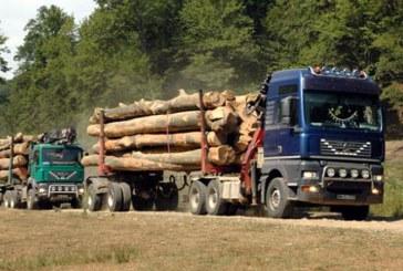Material lemnos, confiscat de politistii din Tautii de Sus