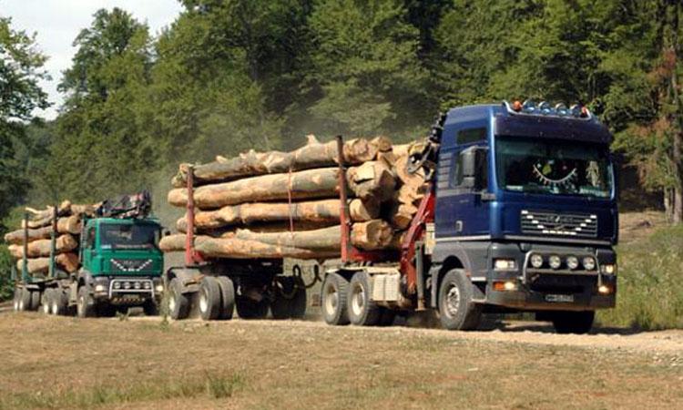 masina-lemn-padure