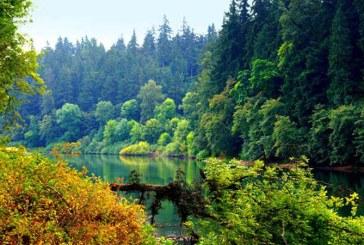 Romsilva a regenerat 11.612 hectare de padure din fondul forestier de stat, in campania de primavara