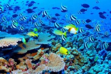 Studiu: Zeci de specii de pesti au disparut in urma pescuitului excesiv in Filipine
