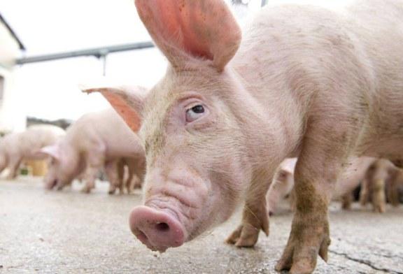 MADR: Documentul privind aparitia si evolutia pestei porcine africane in Romania a fost depus la Administratia Prezidentiala