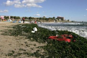 ANAR a strâns 4.000 de tone de alge de pe litoral şi a dat amenzi de 550.000 lei operatorilor