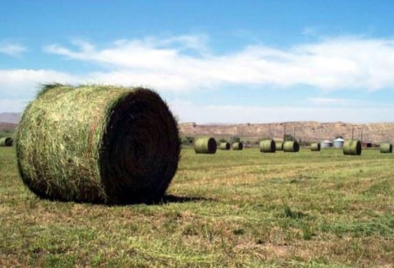 Faur (APIA): Fermierii vor putea lua in jur de 400 de euro pe hectarul de lucerna