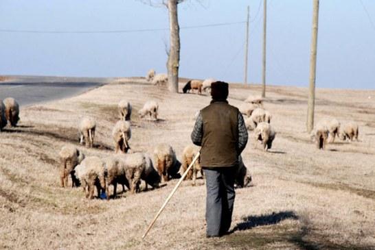 Locuri de muncă în Maramureș: Se caută inclusiv cioban
