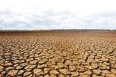Peste 27.800 de fermieri primesc ajutorul de stat pentru culturile înfiinţate în toamna lui 2019, afectate de secetă