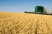 UE se indreapta spre o recolta mare de grau in pofida valului de caldura de la inceputul verii