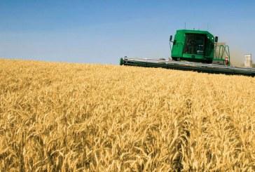 Petre Daea: In acest an s-au inregistrat recorduri istorice la noua culturi agricole