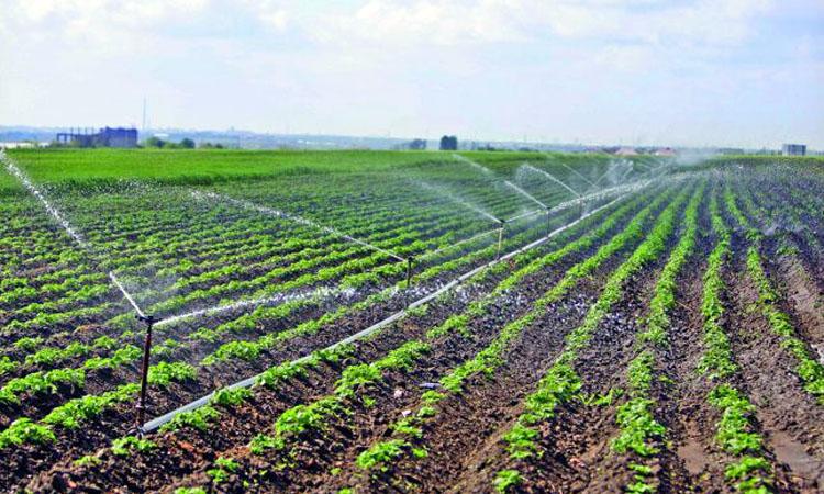 Irimescu: Fermierii care au avut posibilitatea de a iriga si nu au facut-o nu vor primi despagubiri