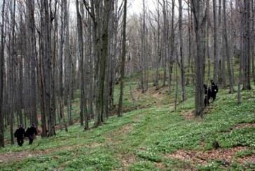 Recomandarile jandarmilor montani: Ce faci atunci cand te ratacesti?