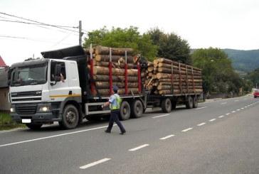 Politistii din Bogdan Voda au confiscat aproximativ 15 mc lemn transportat ilegal