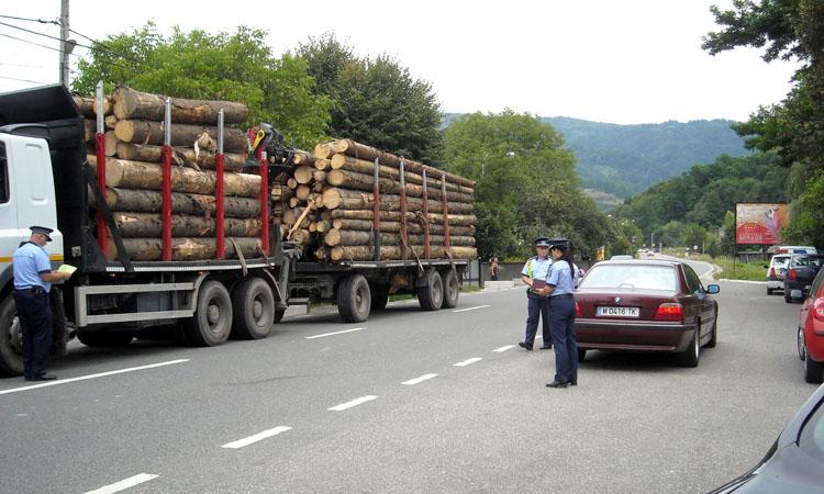 lemn politie 2