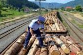 SCUTUL PADURII: Politistii maramureseni au confiscat 23 de metri cubi de material lemnos