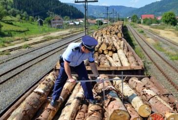 Taierile ilegale de arbori, in vizorul politistilor maramureseni