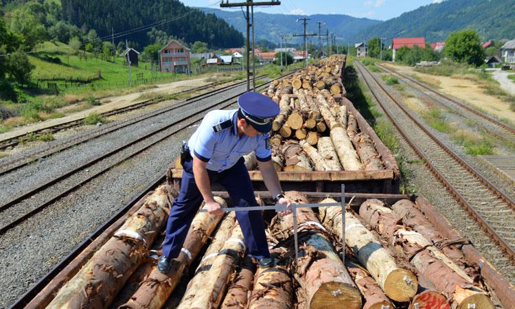 IGPR: Aproape 32.000 de metri cubi de lemn, confiscati de politisti in primele sapte luni