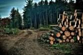 Lemn confiscat la Borșa și Baia Sprie