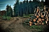 Maramures: Actiune pentru depistarea celor care transporta ilegal material lemnos
