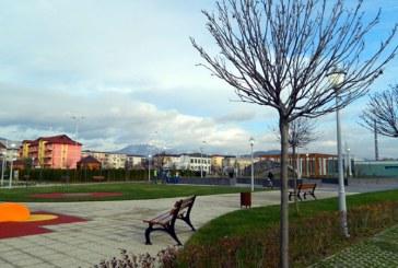 Un consilier local afirma ca sute de copaci plantati in Baia Mare s-au uscat