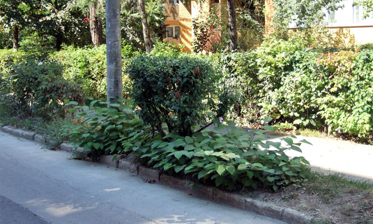 baia mare vegetatie